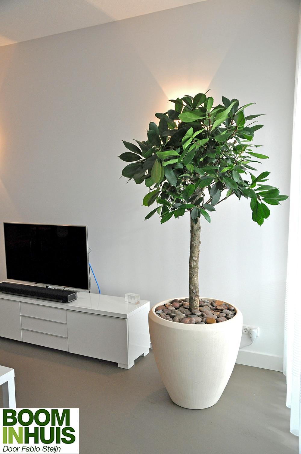 Portfolio - Grote plantenbakken Bomen kopen kamerplanten ...
