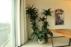 Grootbladige schdaduwplant in U-vormige pot van Handgemaakt aardewerk Plus twee hoge schaduwplanten