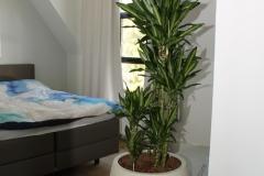 Slaapkamer-met-plant-In-Zandsteen-Bak