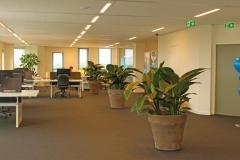Grote-Plant-Voor-Donkere-Plak-In-Terracotta-Handgemaakt-Grijs