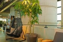Plantenpot-terracotta-grijs-met-boom