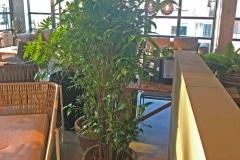 Schaduw-Bamboe-In-bloempot