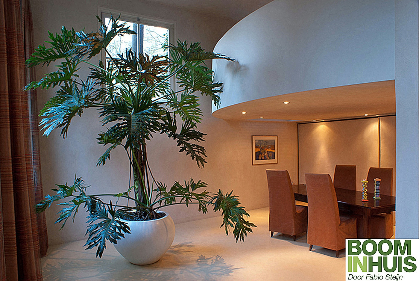 Binnenboom-Groot-Blad-3-meter