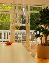 Boom in huis op zonnige plek - bonsai boom (lookalike)