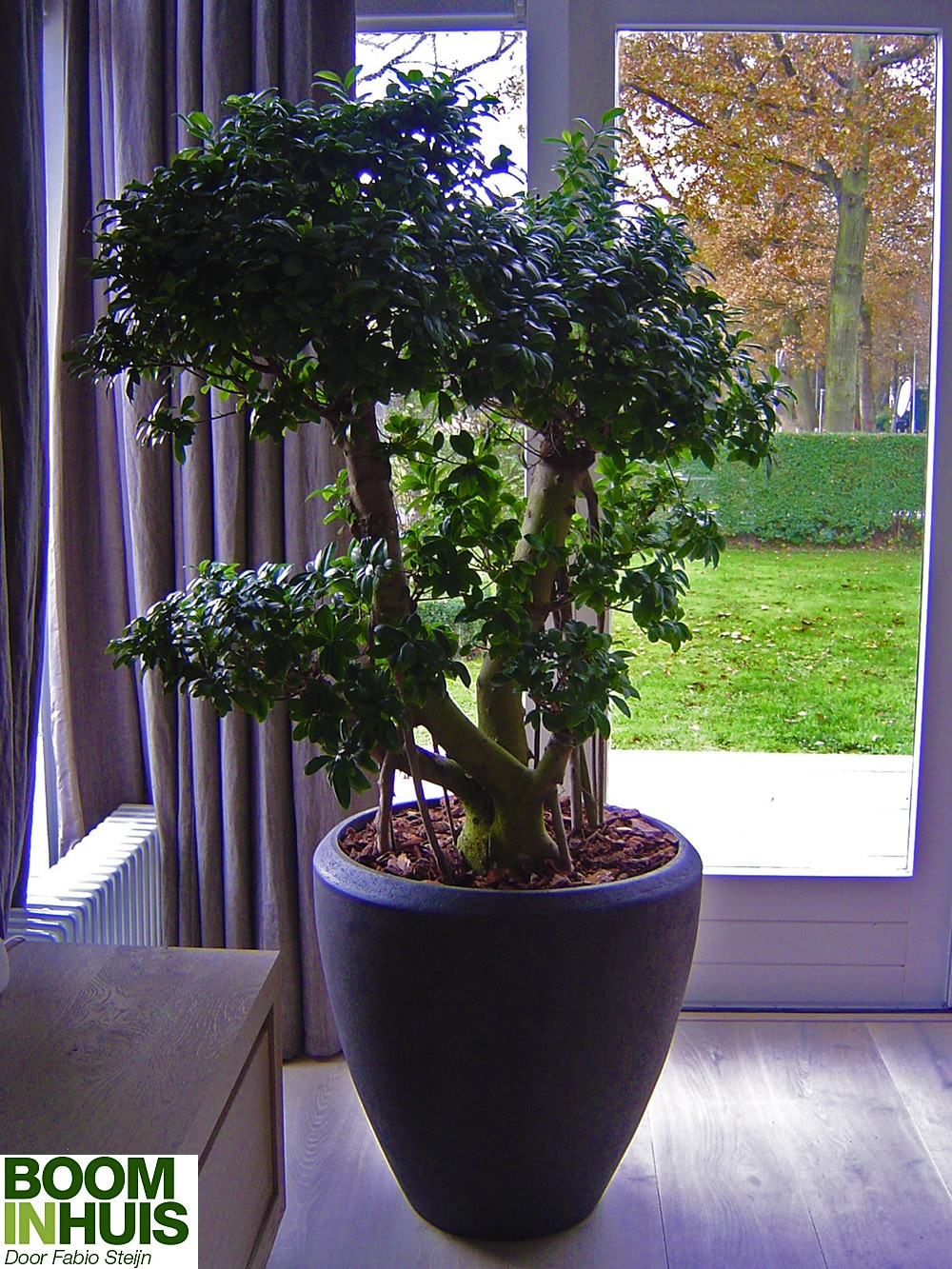 BonsaiBoom-Bonsai-Boom-Plantenbak-Zwart