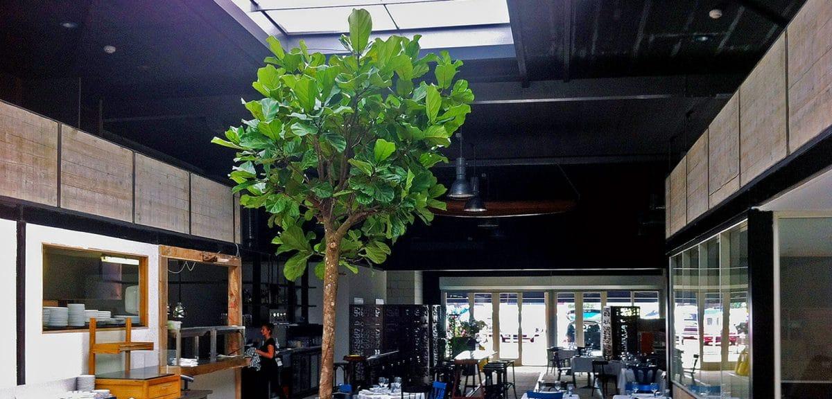 Boom-Grote-Kamerplant-Binnenboom-Restaurant