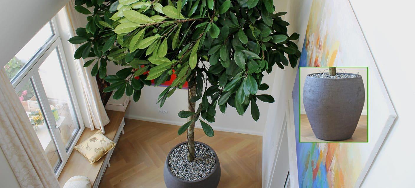 Boom-In-Huis-Binnenboom-Handgemaakte-Plantenbak-Pot