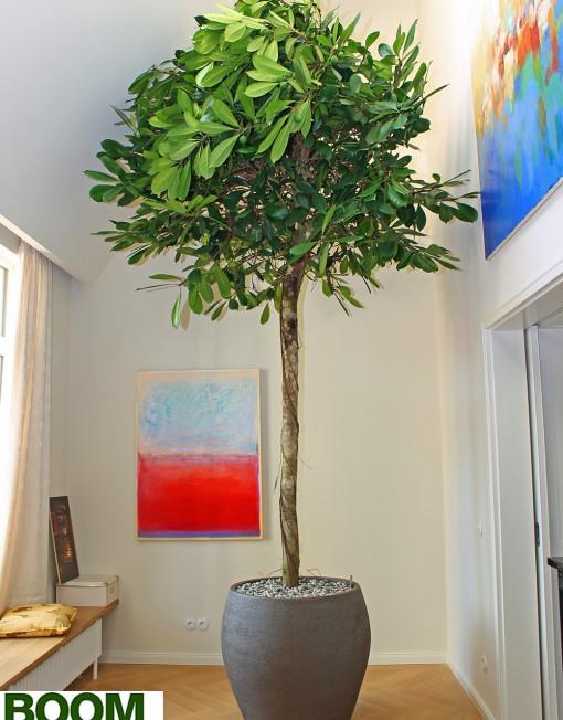 Boom-in-Huis-Handgemaakte-Plantenbak-Aardewerk