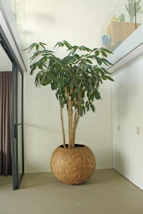 Boom-in-Huis-Lichtgroen-blad-vertkat-300cm