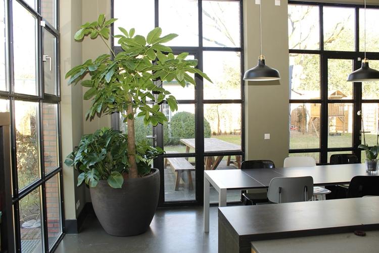 Boom-in-Keuken-in-Duurzame-Plantenbak