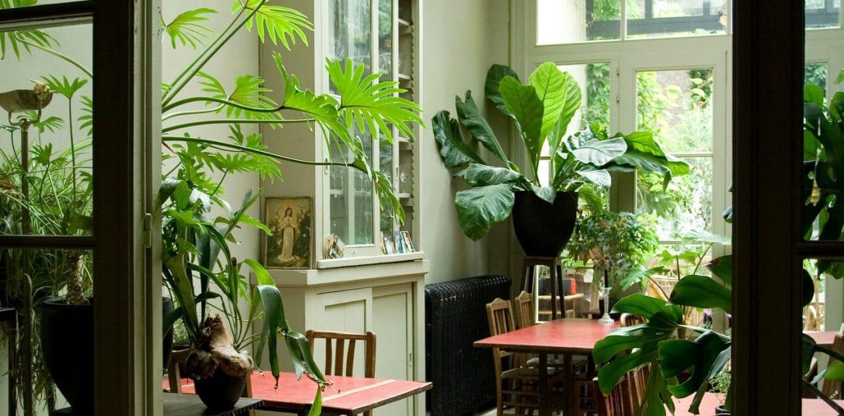 Boom-kamerplanten-planten-binnenboom-bomen