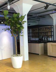Boom in huis op halfschaduw plek - boom met groot blad - op stam - 250 cm