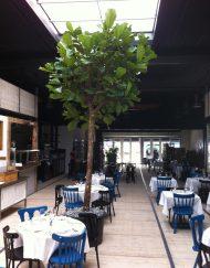 Binnenboom in restaurant