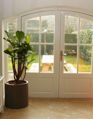 Boom in huis op halfschaduw plek - boom met groot blad - vertakt - 150 cm
