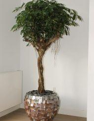 Boom in huis op halfschaduw plek - boom met klein blad - op stam