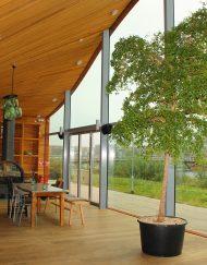 Boom in huis op zonnige plek - boom met klein blad