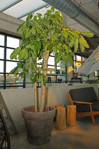 Terracotta-Plantenpot-Grijs