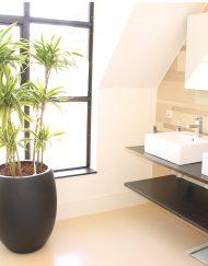 Boom in huis op schaduw plek - boom in badkamer