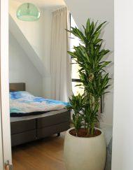 Boom in huis op schaduw plek - slaapkamer