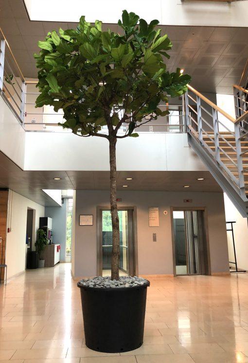 Budgetbak met boom in hoge ruimte Ronde zwarte plantenbak van hergebruikt plastic met toplaag van sierstenen
