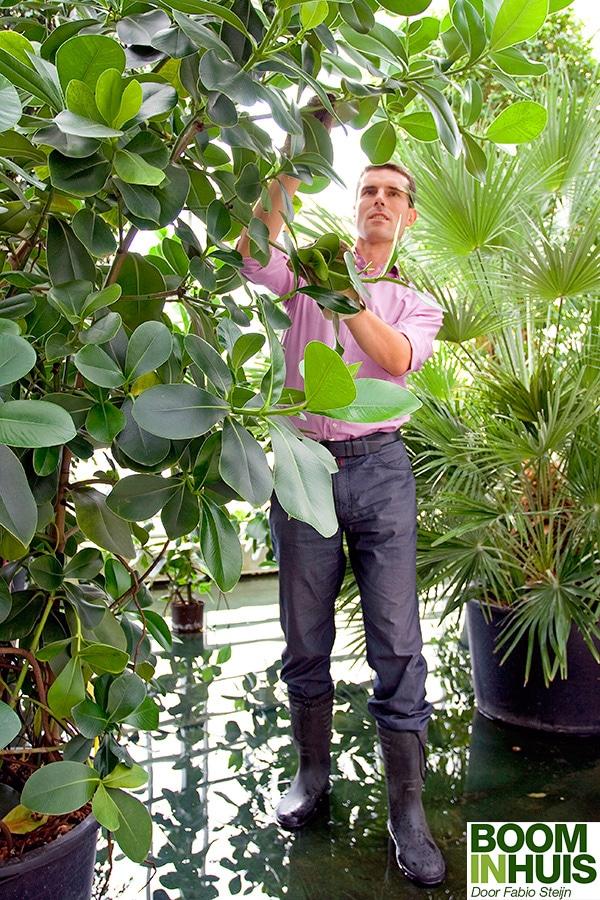 Fabio-Steijn-Grote-Planten-Thuis-Boom-Huis