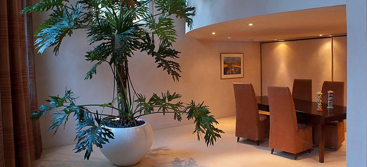 Grote boom thuis grote planten interieur bomen for Grote kamerplanten
