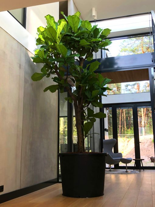Grote ronde zwarte plantenbak van hergebruikt kunststof met boom in hoge ruimte met daklicht