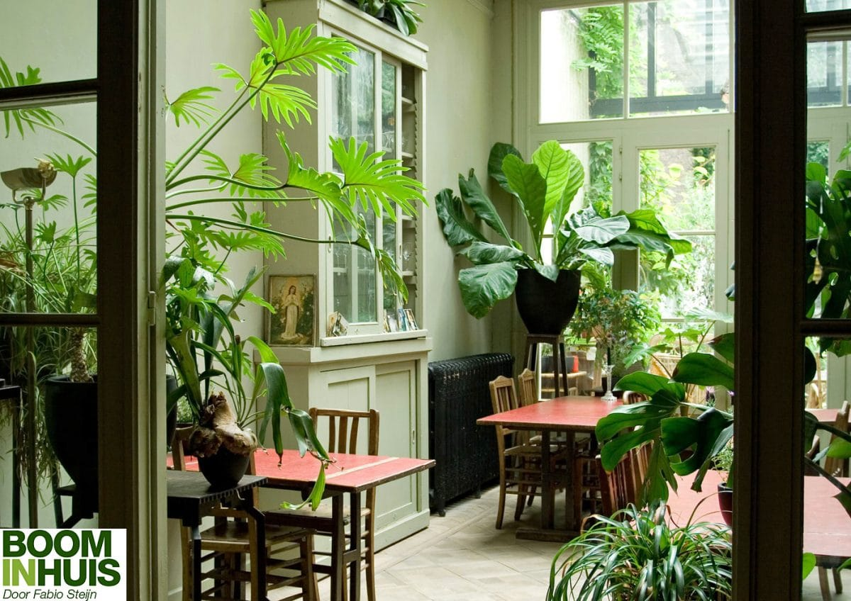 Interieur styling interior design planten bomen bomen for Interieur styling