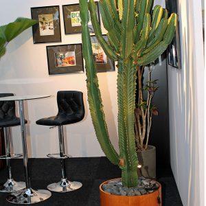 Kaktus-Reuzenkaktus-Grote-Cactus