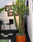 Nadeel-Kamerplant-Boom-Kamerplant-Grote-Plant