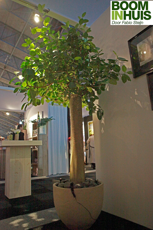 Kamerplanten Kopen Amsterdam.Portfolio Bomen Plantenbakken Kamerplanten Online Kopen