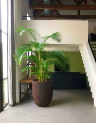 Boom in huis - palmboom - 200 cm