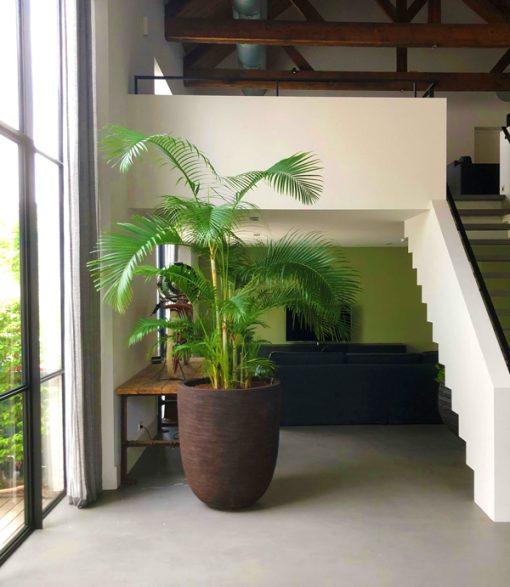 Boom in huis - palmboom - 200 cm