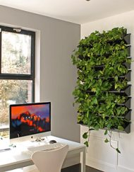 Plantenwand - Groene wand