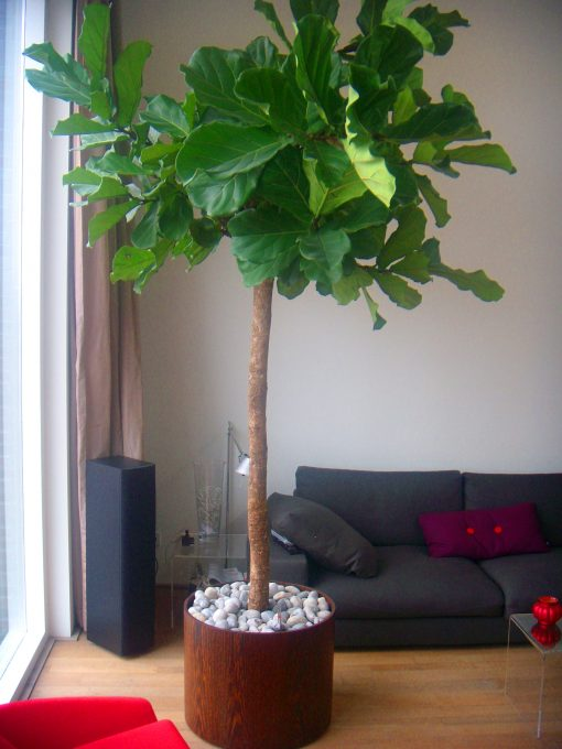 plantenbak hout fineer cilindervormig met boom in huis