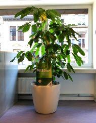 Kunststof plantenbak rond wit