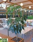 Plantenbak-op-maat-gemaakt