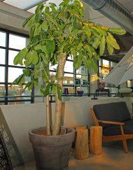 Plantenpot terracotta grijs
