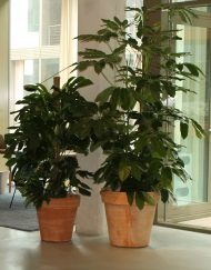 Plantenpot terracotta rood