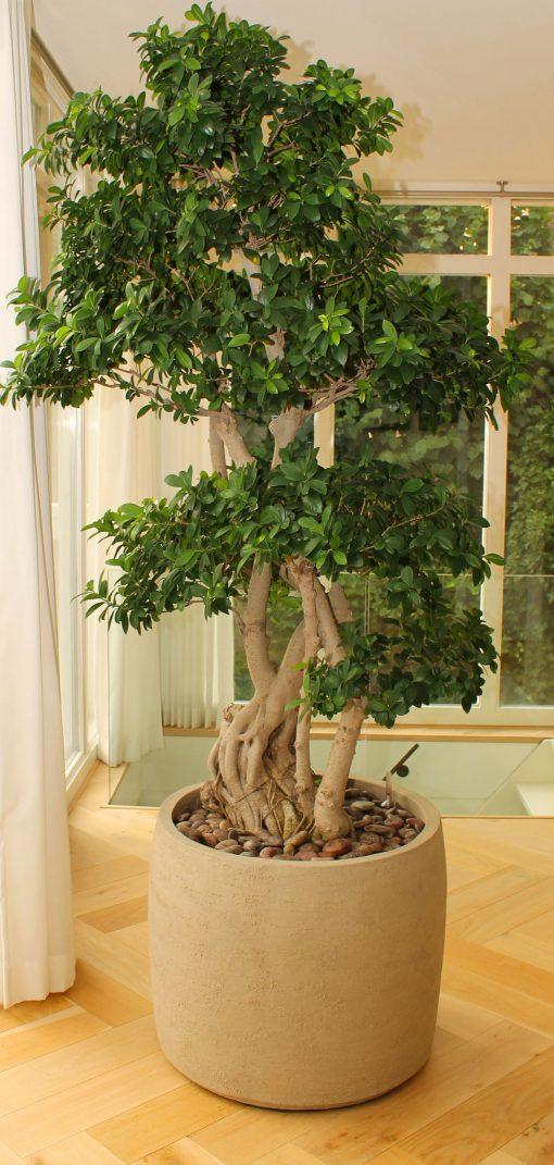 plantenpot handgemaakt aardewerk cilindervormig bol met boom