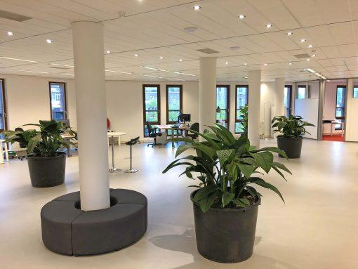 Schaduwplanten met groot blad in grote ruimte
